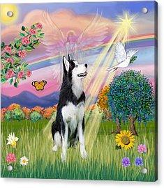 Cloudangel #1 - Siberian Husky Acrylic Print