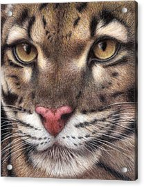 Clouded Leopard Acrylic Print by Pat Erickson