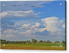 Clouds Aboive The Tree Farm Acrylic Print