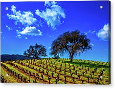 Clouds Above Vinyards Acrylic Print by Garry Gay
