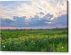 Clouds And Sunflowers Acrylic Print