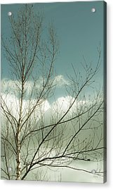 Acrylic Print featuring the photograph Cloudy Blue Sky Through Tree Top No 1 by Ben and Raisa Gertsberg