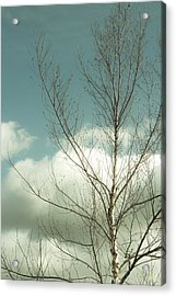 Acrylic Print featuring the photograph Cloudy Blue Sky Through Tree Top No 2 by Ben and Raisa Gertsberg