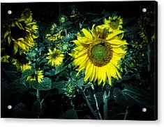 Cloudy Day In A Sunflower Field Acrylic Print