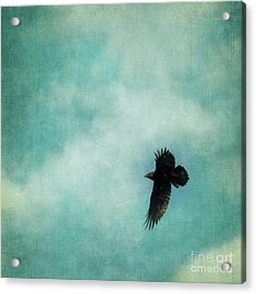 Cloudy Spring Sky With A Soaring Raven  Acrylic Print by Priska Wettstein