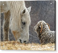 Clouseau And Friend Acrylic Print by Don Schroder