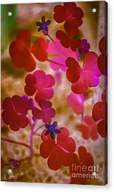 Clover - Abstract Acrylic Print