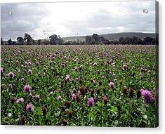 Clover Field Wiltshire England Acrylic Print by Kurt Van Wagner
