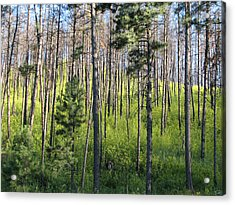 Clover In Pines Acrylic Print by Marion Muhm