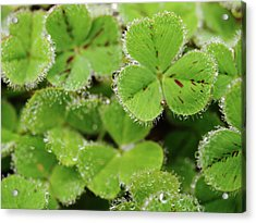 Cloverland Frosted Over Acrylic Print