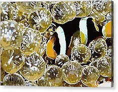 Clown Fish Acrylic Print