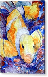 Clown Fish Acrylic Print by Mike Segura