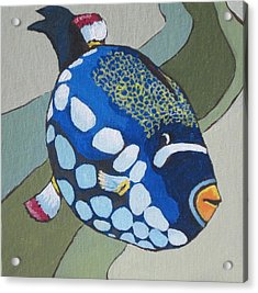 Clown Triggerfish Acrylic Print by Sandy Tracey
