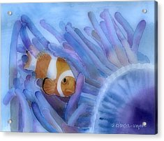 Clownfish And The Sea Anemone Acrylic Print by Arline Wagner