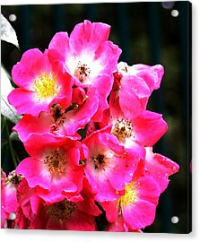 Cluster Acrylic Print by Gerald Mitchell