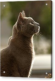 Clydes Profile Acrylic Print by James Steele
