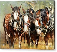 Clydesdale Conversation Acrylic Print by Trudi Simmonds