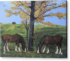 Clydesdale Feeding Acrylic Print