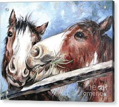 Clydesdale Pair Acrylic Print