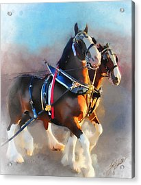 Clydesdales Acrylic Print by Tom Schmidt