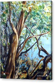 Coastal Forest Acrylic Print by Mary Lynne Powers