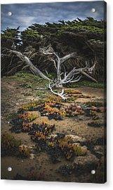 Coastal Guardian Acrylic Print