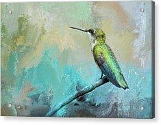Coastal Hummingbird Acrylic Print