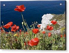 Coastal Poppies Acrylic Print by Richard Garvey-Williams