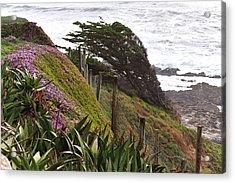 Coastal Windblown Trees Acrylic Print
