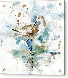 Coatal Sandpiper 2 Acrylic Print