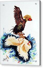 Cock Fighting Acrylic Print