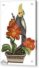 Cockatoo Acrylic Print by June Pressly