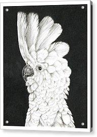 Cockatoo Acrylic Print