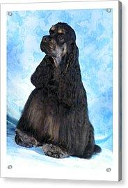 Cocker Spaniel 405 Acrylic Print by Larry Matthews