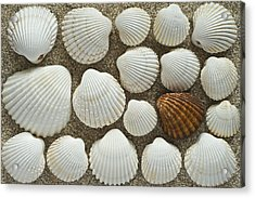 Cockles Collection Acrylic Print by Igor Voljch