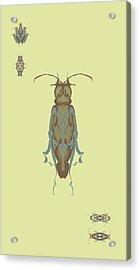 Cockroach Specimen Acrylic Print