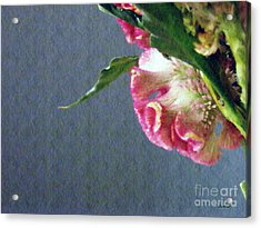 Acrylic Print featuring the photograph Cockscomb Bouquet 6 by Sarah Loft