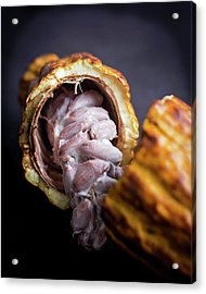 Acrylic Print featuring the photograph Cocoa by Heather Applegate