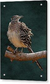 Cocoa Puffed Cuckoo Acrylic Print