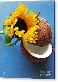 Coconut And Sunflower Harmony Acrylic Print