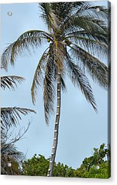 Coconut Collecting Acrylic Print by JAMART Photography