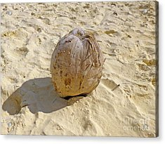 Acrylic Print featuring the photograph Coconut In The Sand by Francesca Mackenney