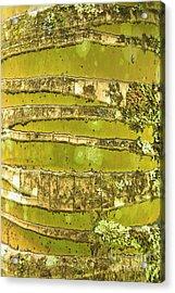 Coconut Palm Bark 1 Acrylic Print by Brandon Tabiolo - Printscapes