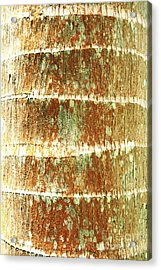 Coconut Palm Bark 2 Acrylic Print by Brandon Tabiolo - Printscapes