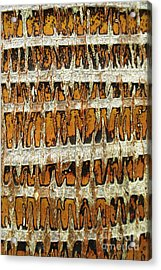 Coconut Palm Bark 3 Acrylic Print by Brandon Tabiolo - Printscapes