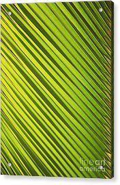 Coconut Palm Acrylic Print by Brandon Tabiolo - Printscapes