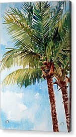 Coconut Palm Acrylic Print by Peter Sit