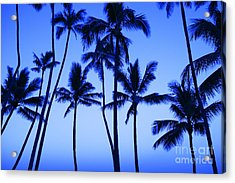 Coconut Palms At Dawn Acrylic Print by Dana Edmunds - Printscapes