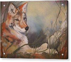 Cody Acrylic Print