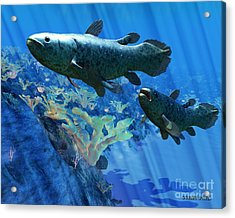 Coelacanth Fish Acrylic Print by Corey Ford